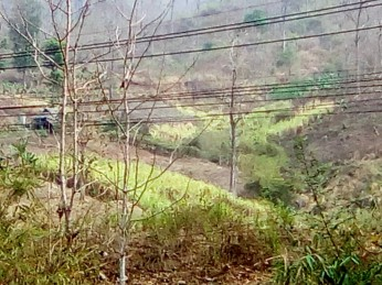 32 Small Hold Crops on the Other Side of the Hills Across the Main Road 20180402@100108.jpg