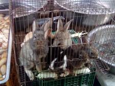 Cute Bunnies 4 the Pot 20180401@101638.jpg