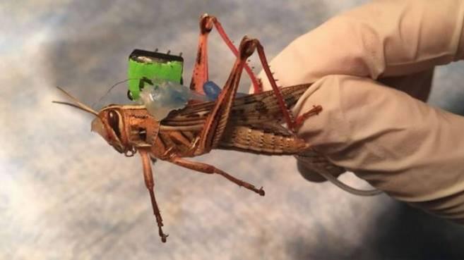 cyborg-locusts